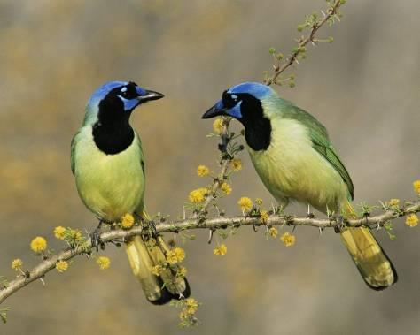 281181-beautiful-birds-like-a-couple